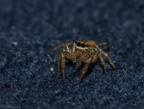 A Spider Portrait